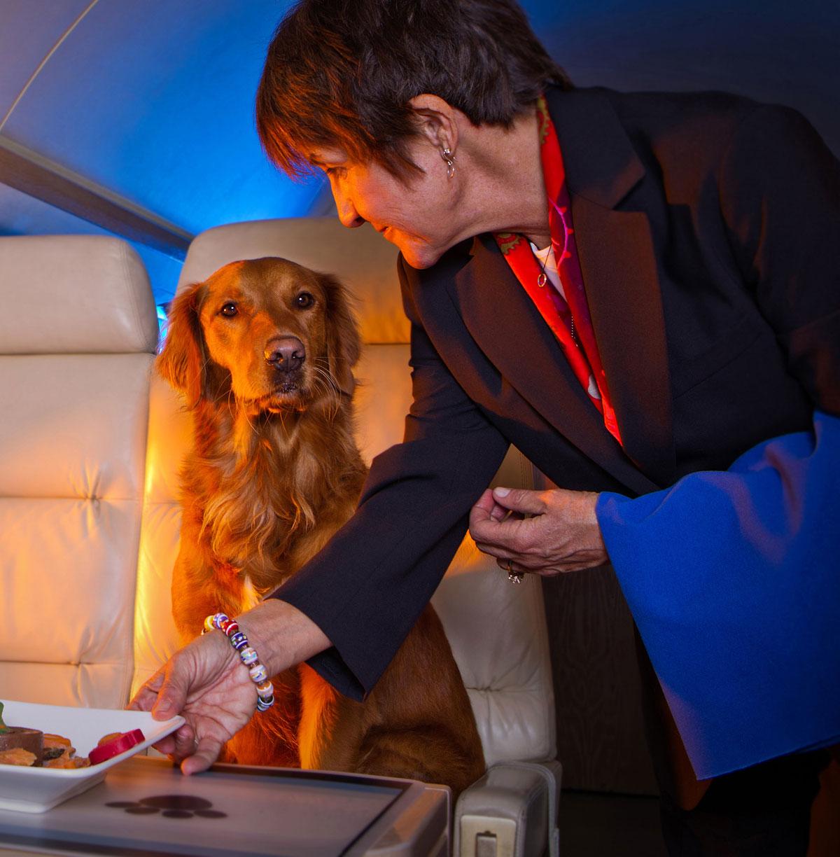 jet-set-pet-service